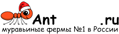Муравьиные фермы AntFarms.ru - Курск